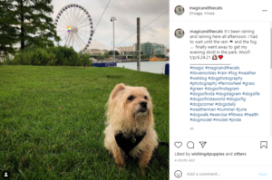 Using Hashtags in Instagram